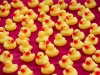 Bataillon de canards en plastiques