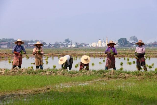 birmanie-11
