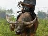 birmanie-10