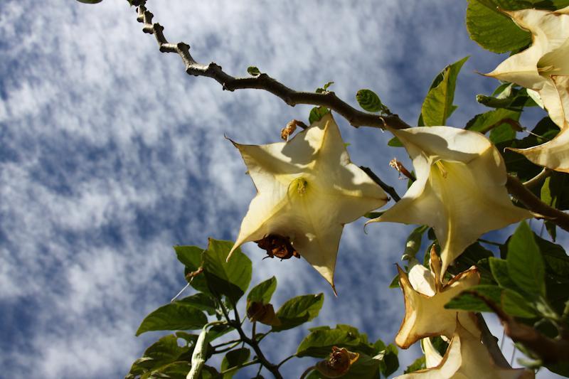 Jolie fleur dont on ne sait pas le nom