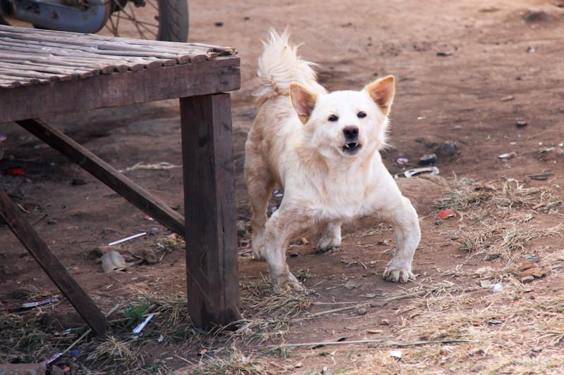 Johnny Bravo canin
