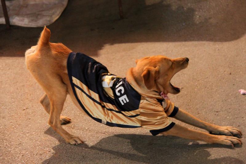 Rex chien policier