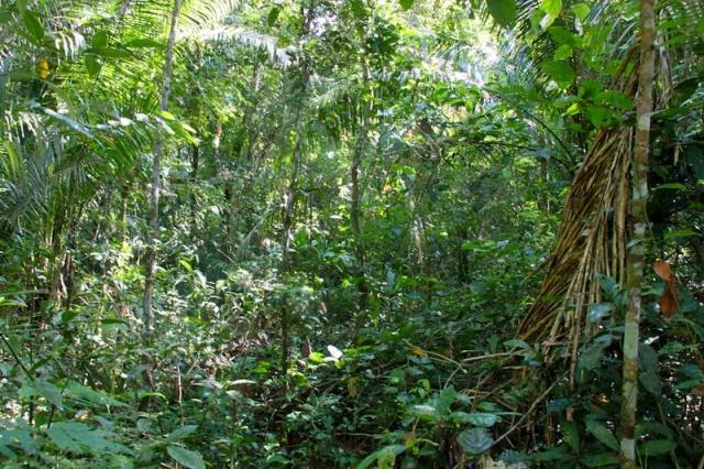 Au milieu de l'Amazonie