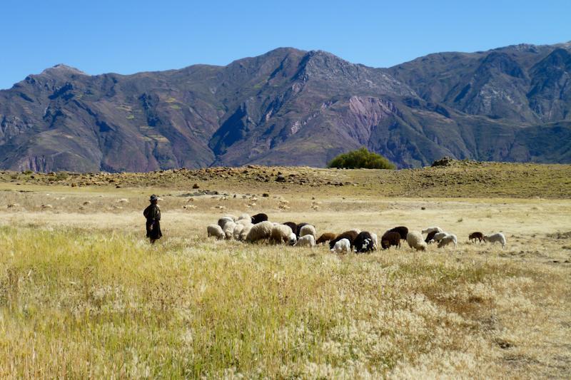 Bergère et ses moutons