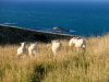 1 2 3 les ptits moutons rouges