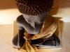 Bouddha nain